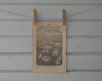 1890 Vintage Sea Anemones Lithograph Illustration