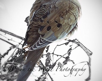 Snowy Mourning Dove Winter Photo digital Art Bird photography Blowing Snow Winter Dove Nature Wall Art Home Office Decor