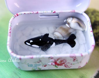 Orca tin with shells