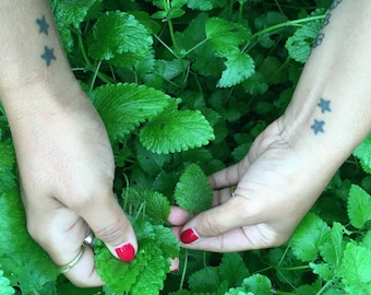 Lemon Balm Tincture