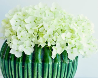 White Hydrangea Flowers in Vintage Green Vase, flower wall art, minimal decor, botanical photograph, flower wall art, airy simple decor