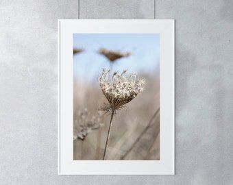 Dried Flowers Print, Dried Queen Anne's Lace, Queen Anne's Lace Prints, Wildflowers Photography, Flowers Photograph