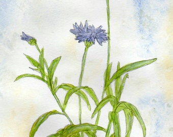 Cornflowers original watercolorpainting