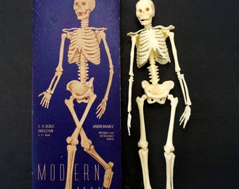 Vintage Human Skeleton Anatomy Model in Original Box, 1/6 scale Modern Man (c.1958) - Science Decor, Medical Oddity Collectible, Art