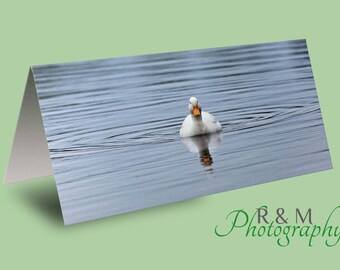 Duck Greeting Card - duck - greetings card - bird card - personalised card - any occasion card - nature card - wildlife card