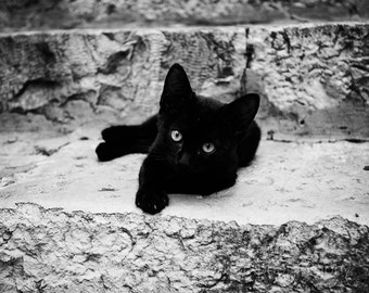 black cat photography, kitten print, nursery decor, baby animal, cat print, animal photo, Croatian Kitten II