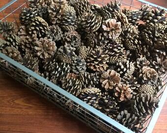40 Pine Cones - Natural - Organic Decor - Rustic Decor - Christmas & Thanksgiving Decor - Wedding Decor - Farmhouse Style