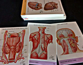 Vintage Anatomical Reference Cards of the Human Body