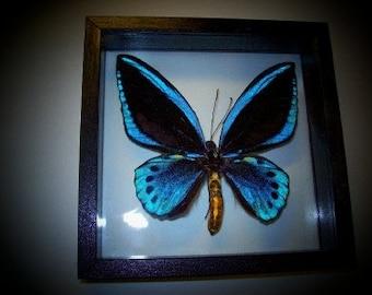 Blue Bird Wing Butterfly