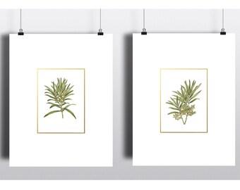 Botanical print set, Prints, Poster, Printable Art, Wall Art, Home Decor, Wall Art Prints, Bedroom Decor, Digital Prints, Instant download.