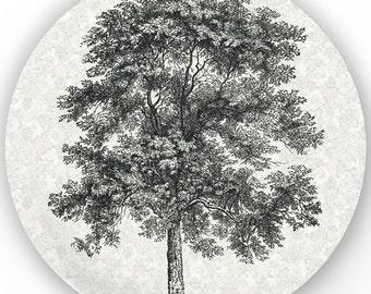 Tree II - vintage engraving image plate
