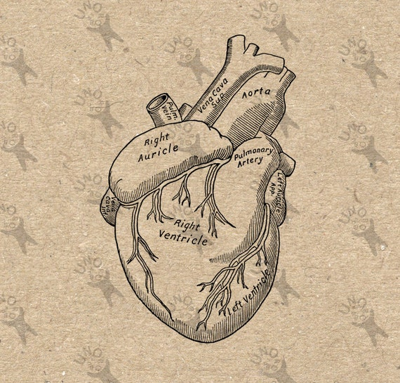 Antique Heart Drawing - Worksheet & Coloring Pages