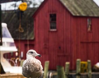 Good Morning (Rockport, Massachusetts; Photograph, Photo; Motif 1; Seagull; New England; Boating, Yacht)