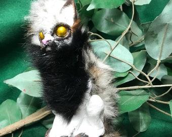 Hatchling Cat