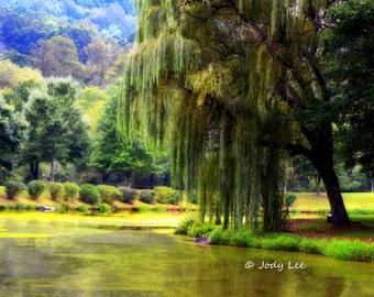 Landscape Photography, Peaceful, Wall Art, Weeping Willow, Pond, Park, Nature photography, Home Decor,Summer Art, Dreamy, Green Wall Art