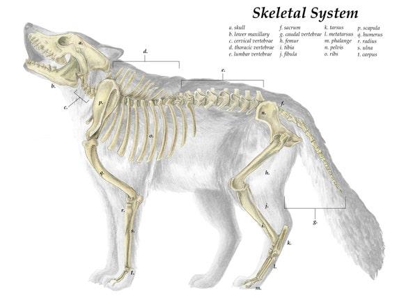 Grey Wolf Skull Diagrams - Auto Electrical Wiring Diagram •