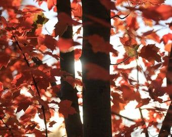 Floral Greeting Card - Sunlight peeping through autumnal trees (Autumn Glow)