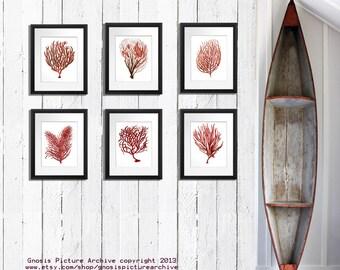 Red Sea Coral art, Coastal Christmas Decor, set of 6 wall art prints,  red coastal living room decor, beach home decor, coral Nautical art