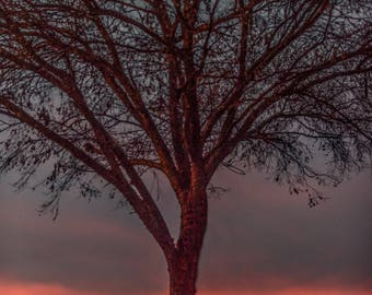 The Sunset Tree • Sunset • Blue Skies • Ocean • Beaches • Trees •House Warming Gift • Wedding Gift • Birthday Gift • Engagement Gift