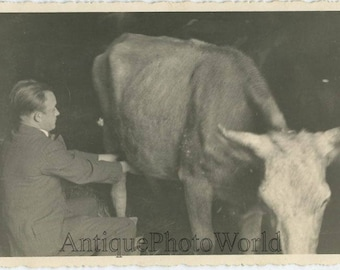 Man in suit milking cow antique occupational photo