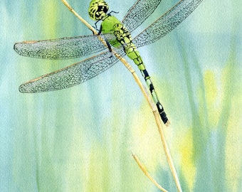 Green Dragonfly giclee print from a watercolor