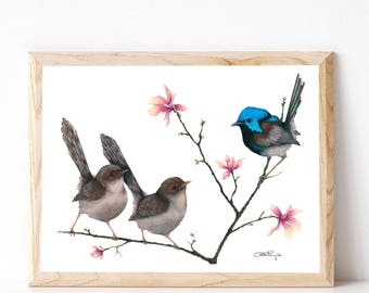 "A3 Fairy Wren Print ""Love at First Sight"""