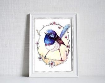 Blue Fairy Wren Print