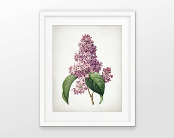 Lilac Print - Lilac Tree Art - Lilac Flower - Antique Botanical - Botanical Print - Flower Decor - Single Print #1549 - INSTANT DOWNLOAD