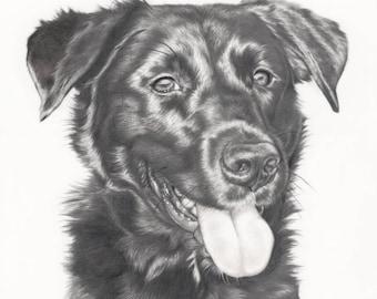Custom Pet Portrait in Graphite - 16x20