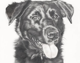 Custom animal Portrait au Graphite - 16 x 20