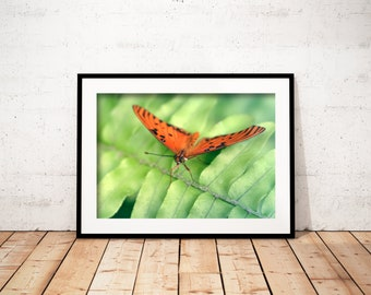BUTTERFLY FLOWER GARDEN Insects Animals Fauna Orange Green Digital Downloads Printable Art Nature Photography