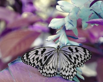 Butterfly on a flower, digital downloadable art