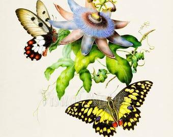 Passion Fruit Flower Print, Butterfly Art Print, Butterfly Poster, Floral Art, Garden, yellow butterfly, white butterfly, blue flower