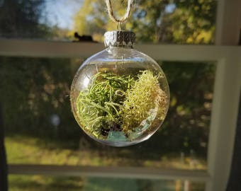 Single Clear Plastic Terrarium Ornament Filled with Assorted Mosses, Lichen, and Bark