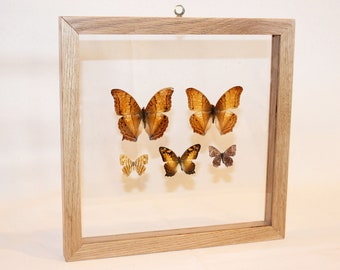Real Butterflies Framed, Butterfly Wall Art, 11x11 Shadowbox Frame, Hand-Made White Oak Frame, Butterfly Home Decor