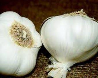 200pcs Giant Garlic Seeds Heirloom Organic Bulb Seed Home Garden Vegetable Herb