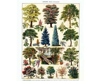 1933 Vintage Trees Print. Garden Trees. Antique Ornamental tree print. Authentic Framable Art. Larousse