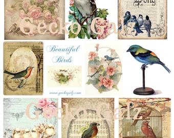 Beautiful Birds Digital Collage Sheet