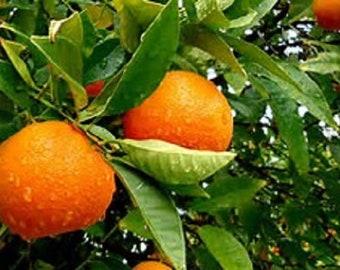 Gentle Orange Face Scrub