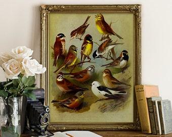 Botanical Print Antique Art Bird Print Buntings Giclee Vintage Natural History Bird Art Decorative Audubon Style Reproduction B009