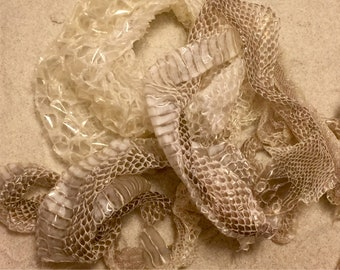 Snake Skin ~ Hermit Crab Food