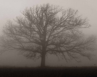 Lonely Tree in Fog Photo, Nature Landscape Photography, Black White Gray Minimalist Foggy Mist Haze Ombre Modern Home Decor Wall Art