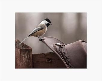 Howdy Chickadee (Matted Print)