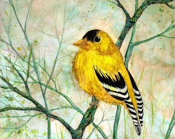 Goldfinch: Fine Art Print