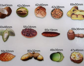 Nut, Seeds, & Shels. A collection of 13 wooden cutouts of Various nuts