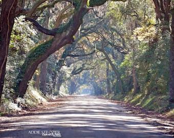 Botany Bay Road Edisto Beach  / Trees Moss South Carolina Wall Art Branches Canopy Island