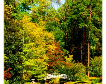 Iris Bridge Autumn