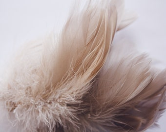 Champagne Beige Goose Coquille Feathers. 2 Inches Strip Jam Packed.
