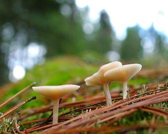 Mushroom in Forest in Eastern Washington, Mossy Cedar Forest, Forage Pacific Northwest Nature, Chanterelle Mushroom, Forest Nursery Decor