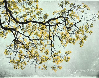 Yellow Photography Tree Wall Art Mustard Yellow Mint Gray Nature Photograph The Yellow Tree 12x8